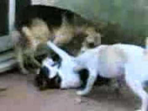 I nostri cani uccidono pallina youtube for I cani youtube
