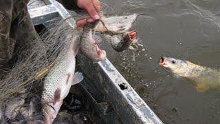 Рыбалка на реке Амур Ставная сеть Сазан карась щука Дикие места