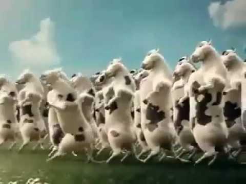 Xem Chương trình Quảng Cáo Vinamilk - Đàn bò nhảy múa hài hước, vui nhộn