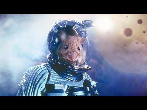 Возвращение мышей из космоса