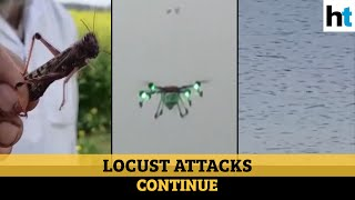 Watch: Drones & sirens used to scare away crop-eating locusts in Rajasthan