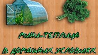 Как сделать мини-теплицу для выращивания зелени