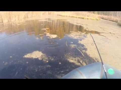 Начинающим рыболовам ловля не крупной щуки на воблер,видео rybachil.ru