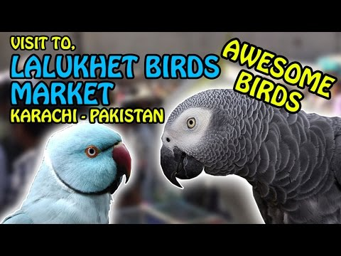 Birds Market Lalukhet Karachi   Biggest Sunday Birds Market in Pakistan   Video in Urdu/Hindi
