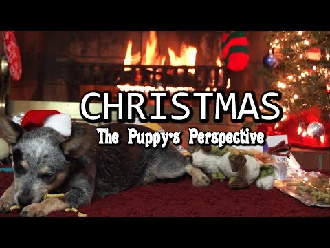 Christmas - Puppy Perspective