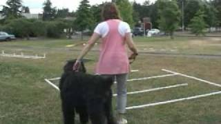Dog Training - Tellington Ttouch® For Dogs - Lori Stevens