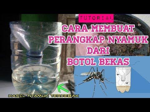 Cukup dengan Minyak Kayu Putih !!Nyamuk Hilang Selamanya || Begini Cara Ampuh Usir Nyamuk.