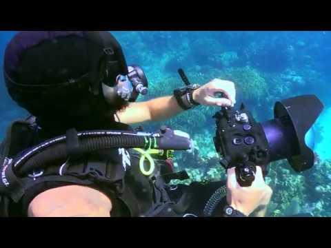 Advanced Underwater Video Course - GoMEDIA @ Utila Dive Centre