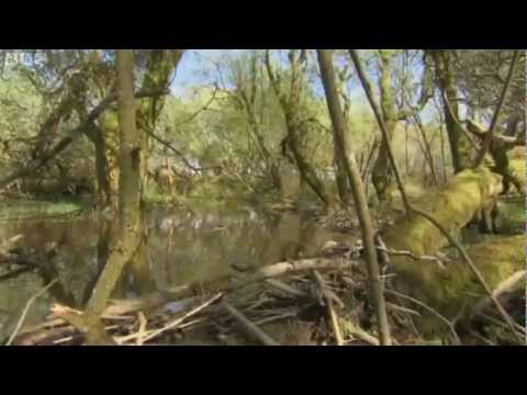 Devon Beaver Project