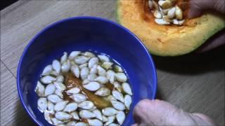 Тыква.  Собираем семена.(Как правильно собрать и сохранить семена тыквы можно узнать посмотрев видео.Екатерина Снытко, http://sovetecaterinas...., 2015-11-24T14:28:30.000Z)