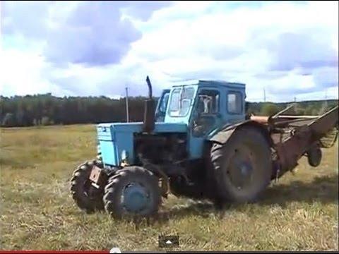 мтз- 80 с куном, погрузка овса - YouTube