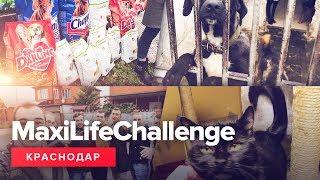 MaxiLifeChallenge - Краснодар. Приют бездомных животных.
