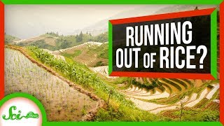How We Could Prevent a Global Rice Shortage