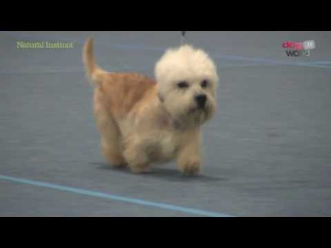 Scottish Kennel Club 2016 - Terrier group