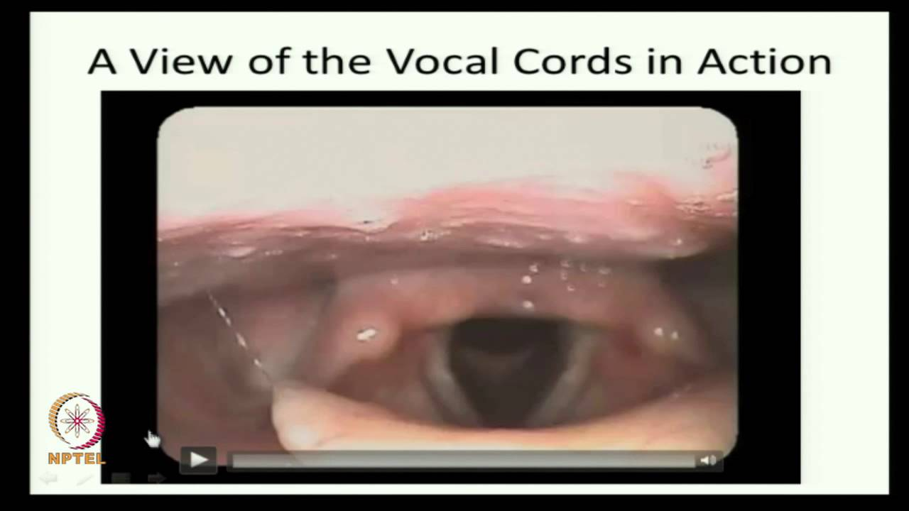 Mod-01 Lec-09 Functions of Vocal Cords