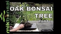Bonsai Demonstration  How To  Bonsai  Oak Trees Part 1 Nursery plant to bonsai tree | mikbonsai