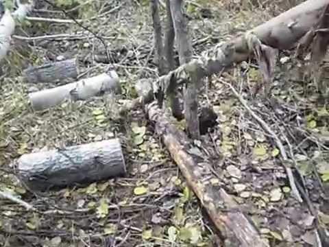 Инструкция Охоты На Лося На Реву