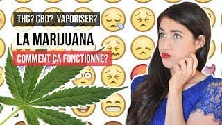 Cannabis: ça fonctionne comment? THC, CBD et cannabinoïdes!   TOUT SAVOIR SUR CETTE DROGUE