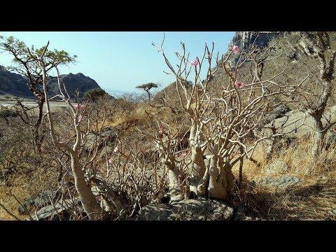 Expedition Oman 2018