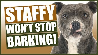 How To Stop Your STAFFORDSHIRE BULL TERRIER Barking