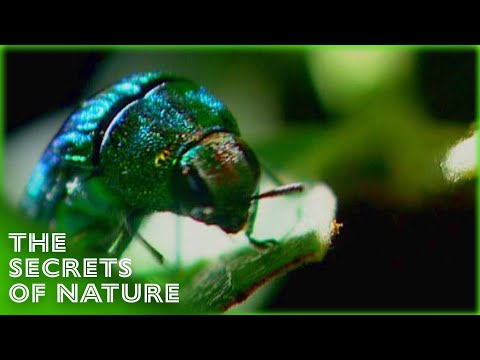 Beetles - The Whole Story S01E06 - The Secrets of Nature