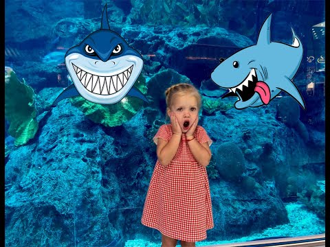 Aquarium and underwater zoo Dubai mall. Fun for children. Learn sea creatures with baby.
