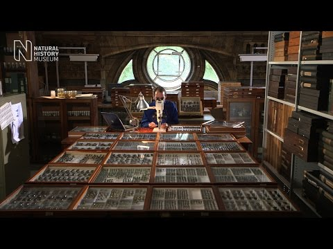 Digitising the collections | Natural History Museum