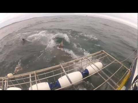 Shark Cage Diving Gansbaai Anne et Jonathan Giustino go pro cape town