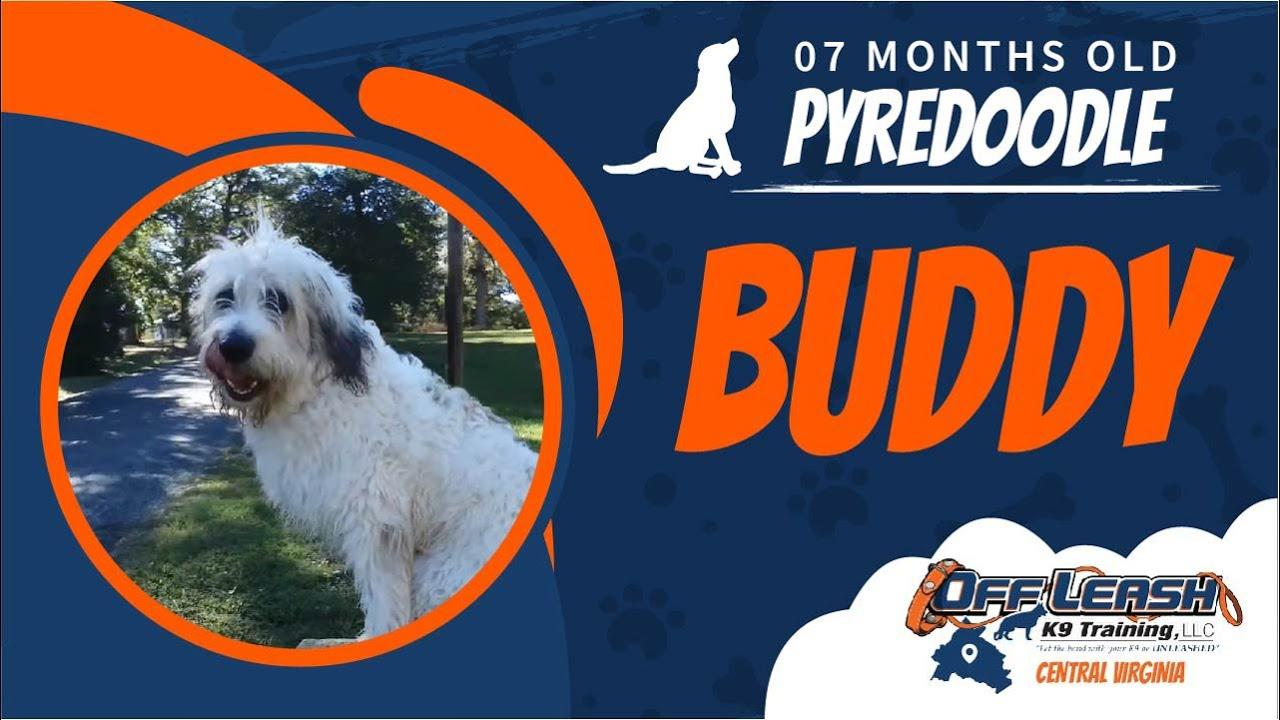 Richmond Virginia Dog Training