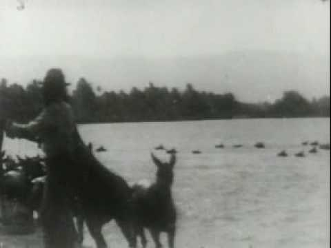 1900 A Historic Feat: General Bell's Mule Pack Train Swimming Agno River, Philippines