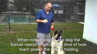 Dog Training - Interplay of the Connection