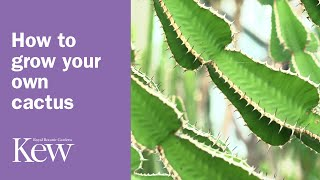 How to grow your own cactus