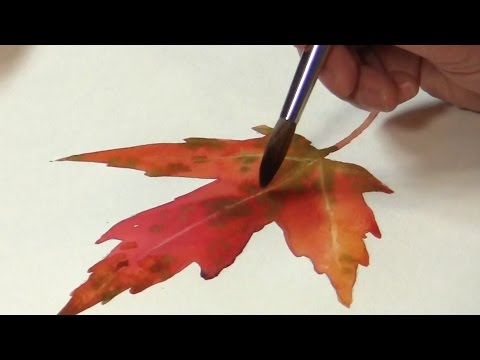 Plant painting  watercolor of colorful autumn leaf #5 v1