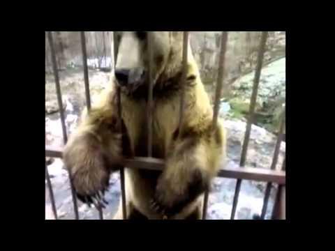 Soviet Russian Bear is Modest