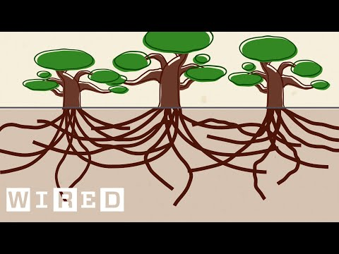 Using Live Oak Trees as a Blueprint for Surviving Hurricanes | Think Like a Tree