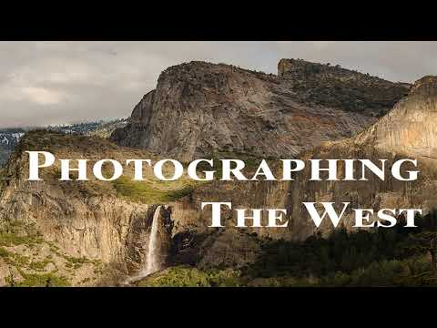 Yellowstone Bears and Wolves with Jim Halfpenny