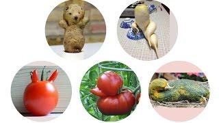 Прикольные овощи и фрукты