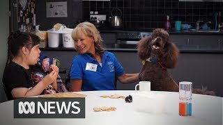 """""""Dogs don't judge"""": How Jody Morrish is using poodle power to help people in need"""