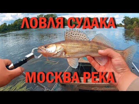 ловля судака на реке белая видео