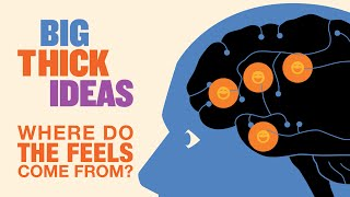 The Feelz: Where Do They Come From? - Big Thick Ideas