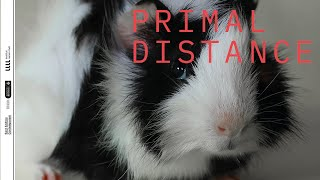 Primal Distance - Online Performance by Camila Cañeque
