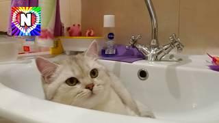 КОТЕНОК Смешные коты и котята 2017 NEW Симка на канале НАСТЮШИК Котики мультики Видео про котиков