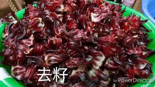 洛神花蜜餞106-11