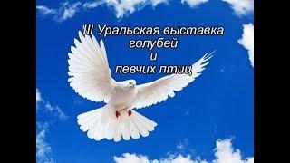 3 Уральская выставка голубей и певчих птиц фото