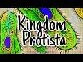 Materi Biologi Kls 10 tentang Kingdom Protista