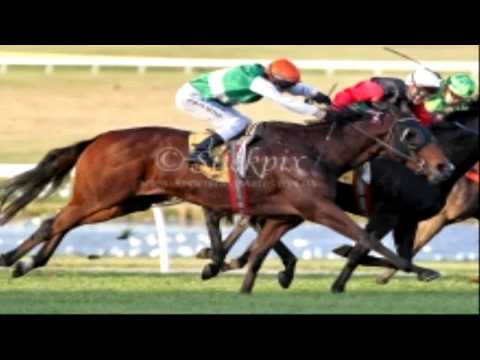 All Horse Racing Results