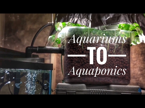 Aquariums to aquaponics a cheap and easy first system for fish tank people