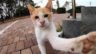 狩りに失敗した猫、カメラに八つ当たりの猫パンチ!