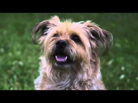Surprising Dog Rescue Story