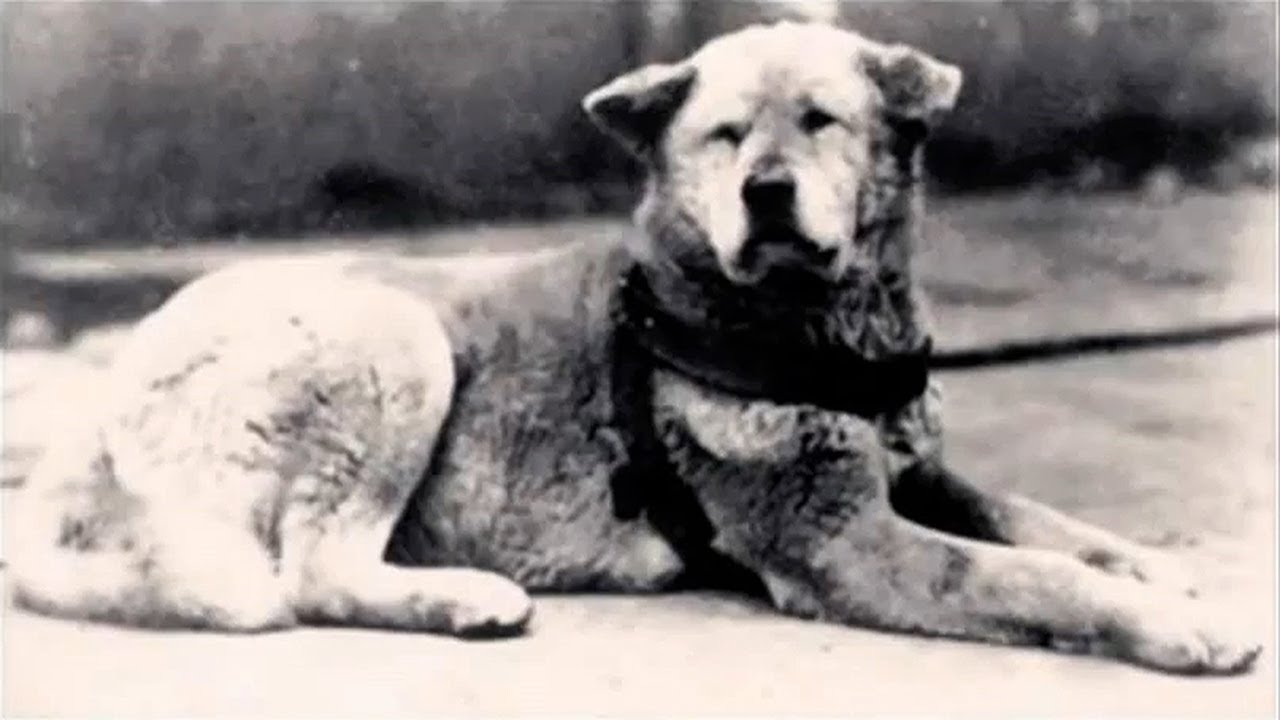 hachiko the true story of a dog amp undying love youtube